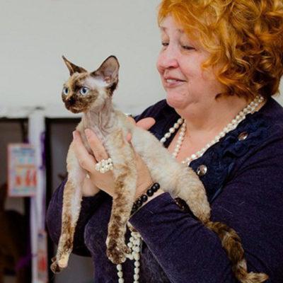 HILLARY CURLY JOY - кошка-мама питомника Elsweyr