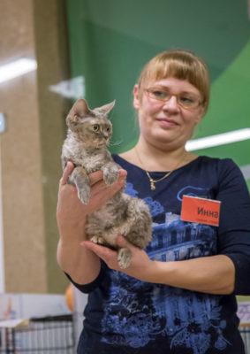 EVA CURLY JOY - кошка мама питомника Elsweyr.